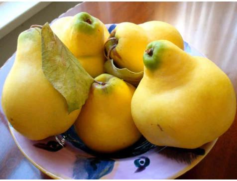 Айва грушевидная ярко-желтая Бабье лето